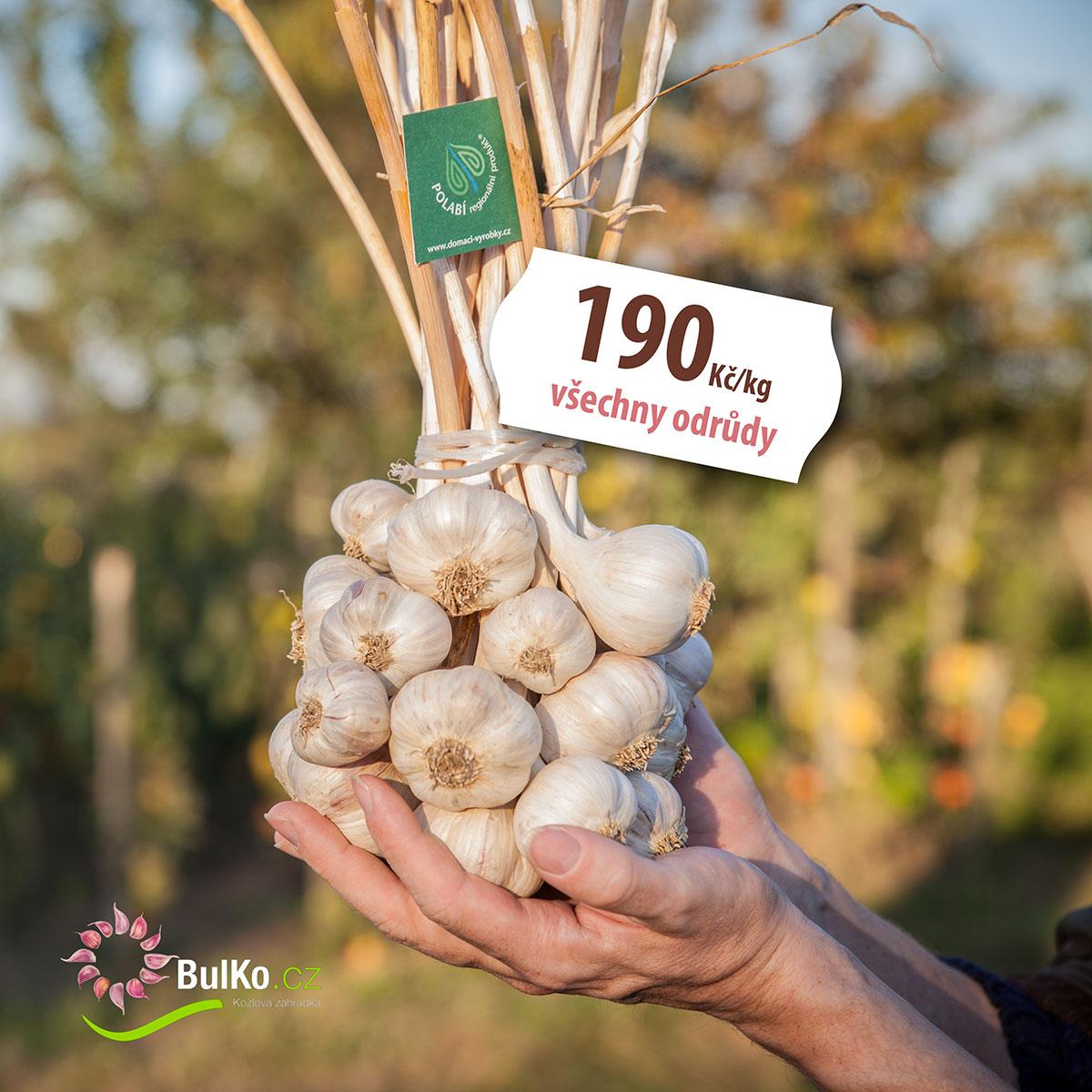Kytice česneku - možnost všech prodávaných druhů